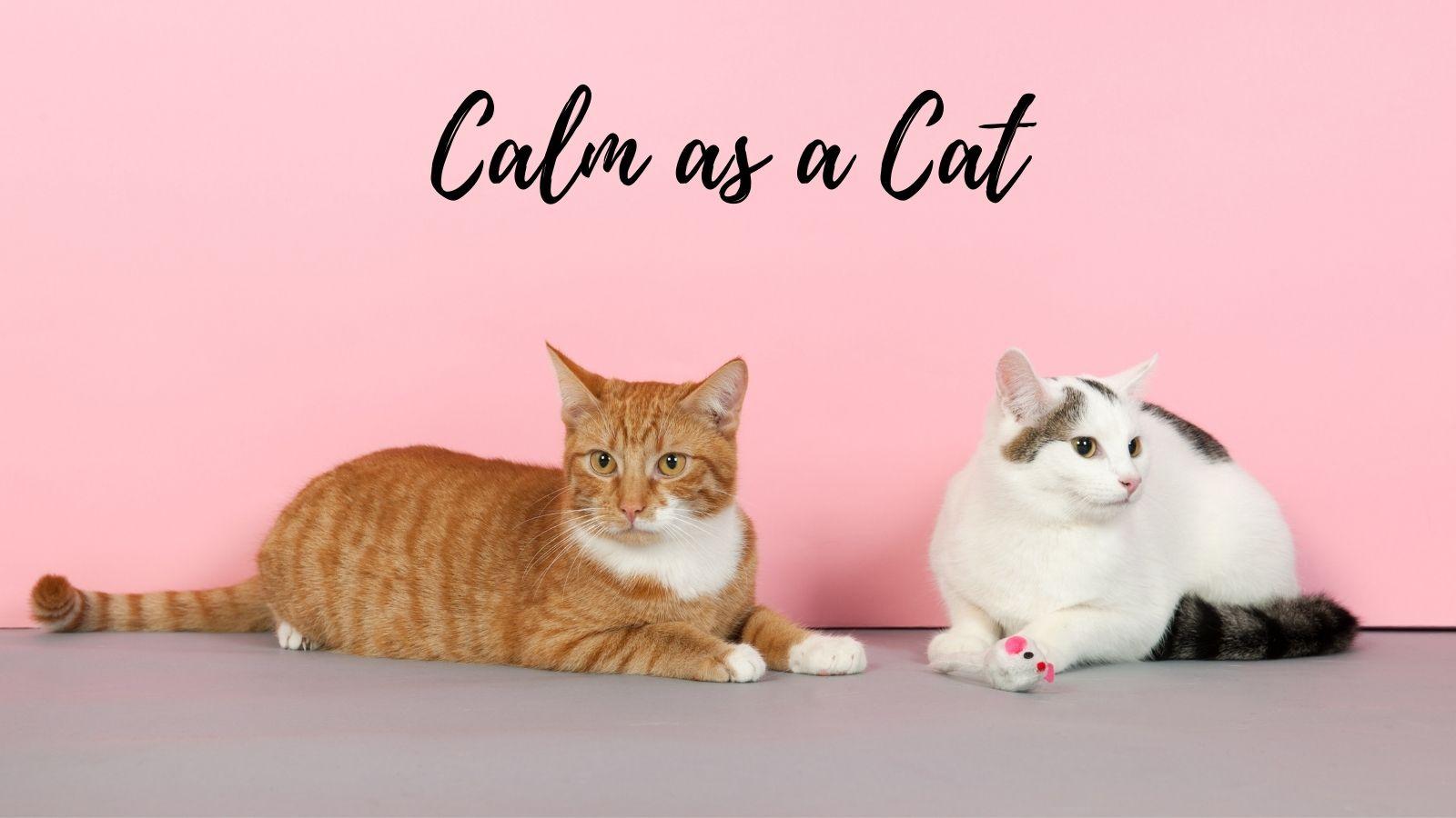 calm as a cat